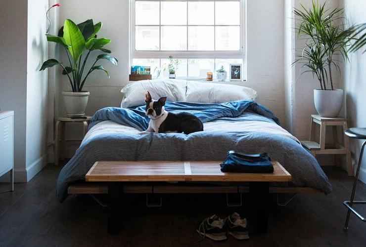 no plants in bedroom feng shui rule