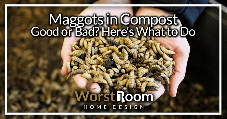 Maggots In Compost Good Or Bad Here S