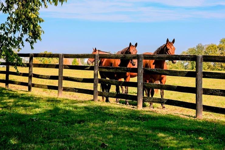 split rail fence for horses
