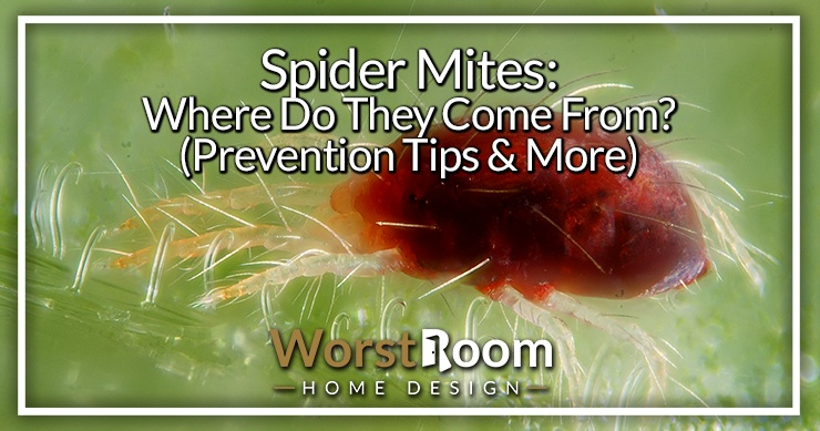 where do spider mites comes from?