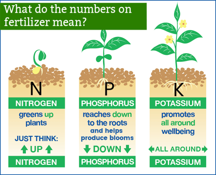 How the three N-P-K Fertilizer Numbers Benefit Plants