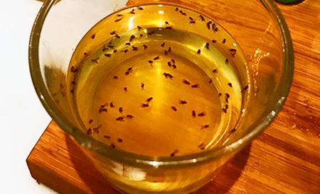 cider vinegar and soap fungus gnat trap