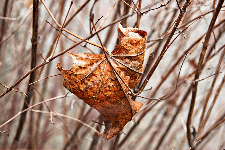 dried leaves can be a sign of a dying tree if it's not currently autumn or winter