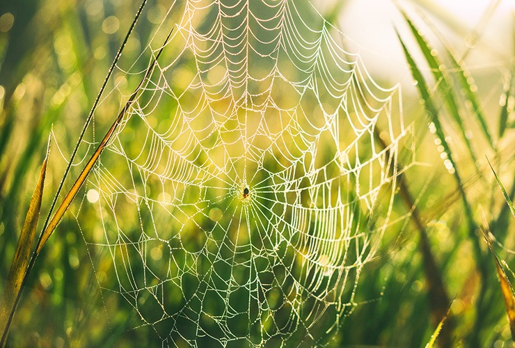 getting rid of spider webs
