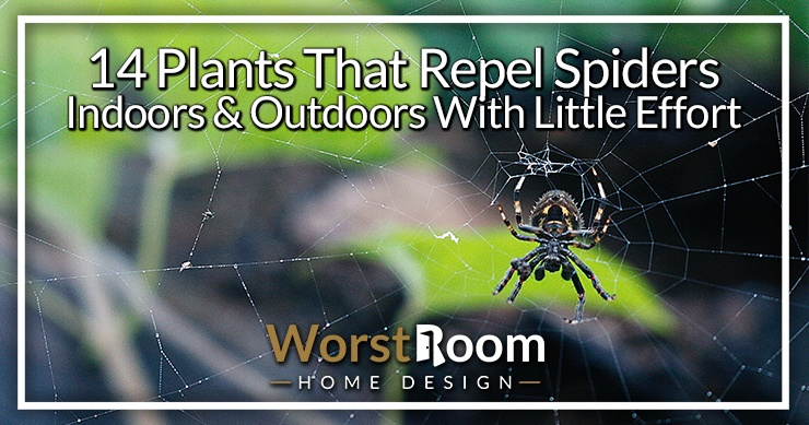 plants that repel spiders