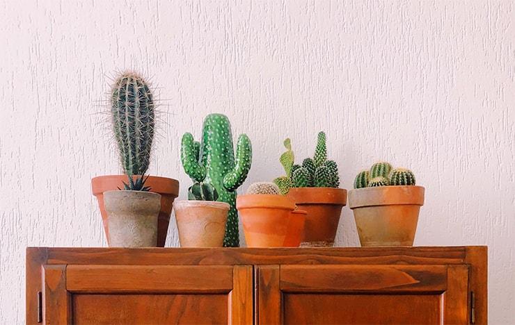 cactus types
