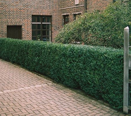 hedge fence alternatives to fencing