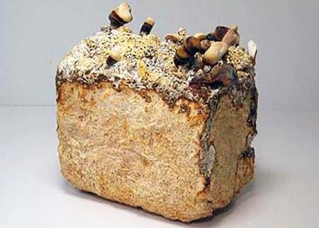mycelium bricks