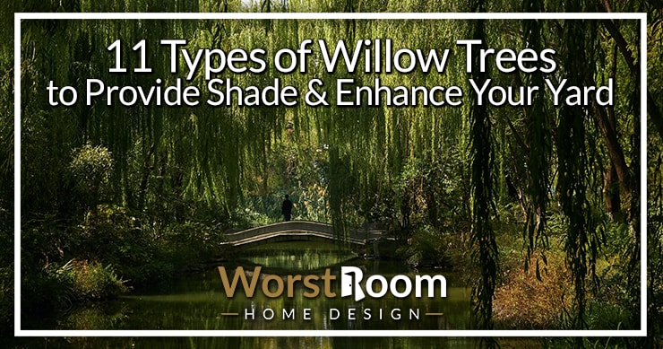 types of willow trees