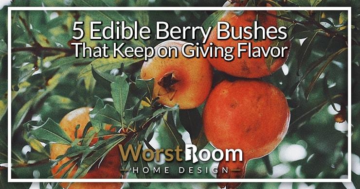 edible berry bushes