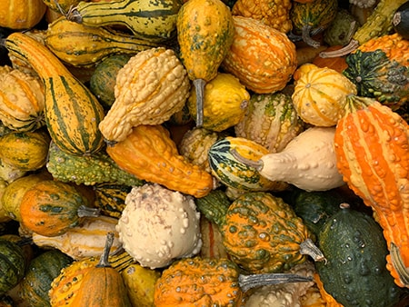 everyone knows gourds are climber vegetables as long as you don't let them become too heavy