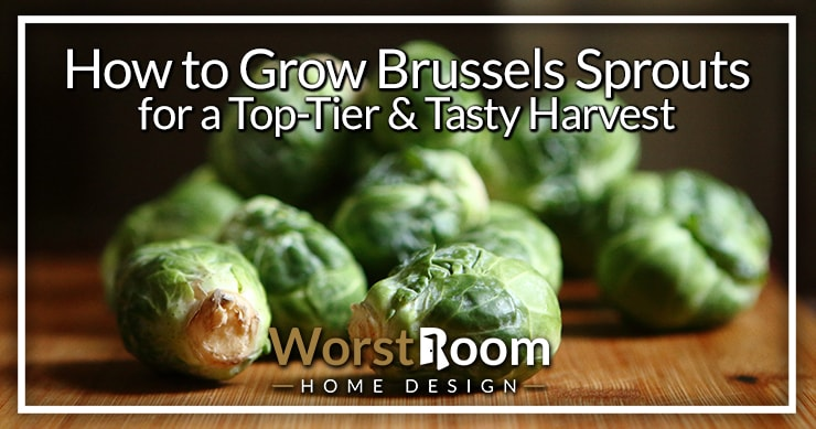 how to grow brussels sprouts