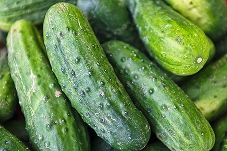 how to plant cucumbers