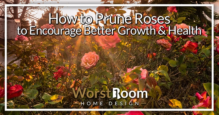 how to prune roses