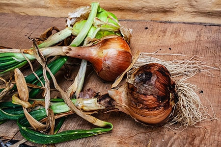 how to take care of onions