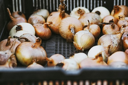 when to harvest onions