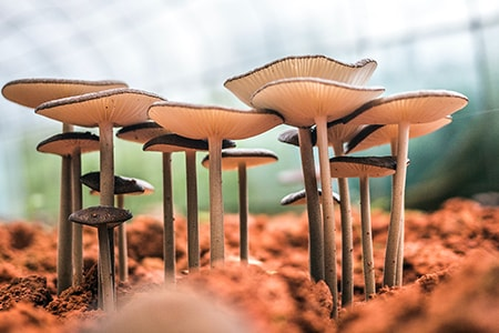 get started growing mushrooms in your basement