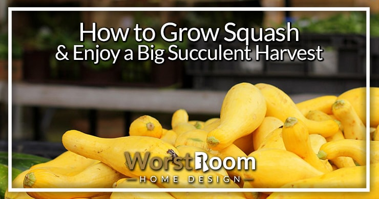 how to grow squash