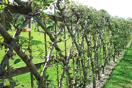 natural fences