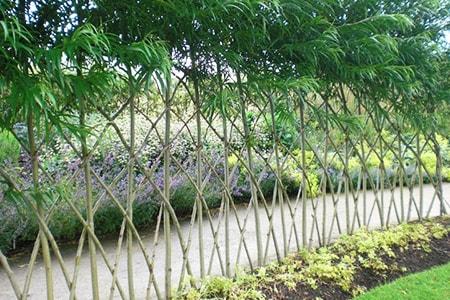 natural fencing