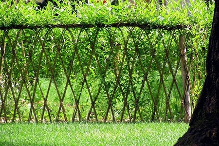 natural plant fence