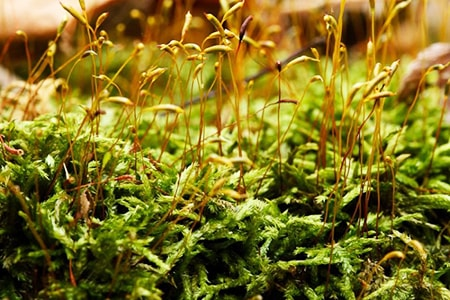 tousled treasure moss