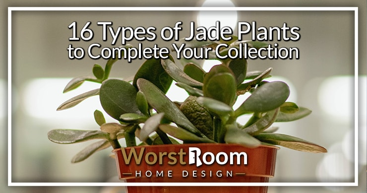 types of jade plants