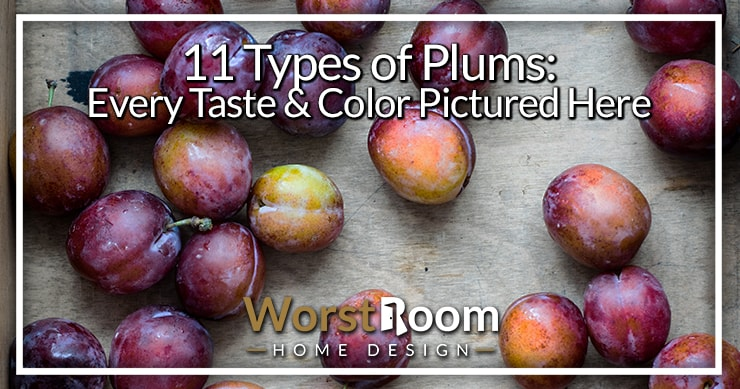 types of plums