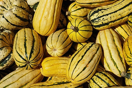 when to harvest squash