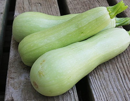 bianco di trieste zucchini are different types of zucchini visually in that the bottoms are more bulbous