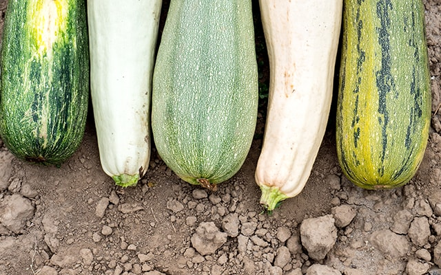 types of zucchini